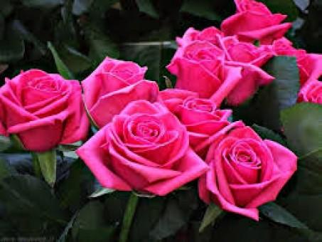 Il linguaggio segreto dei fiori  scegliete con attenzione 3a0d0257adbb