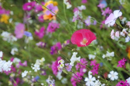 Bouquet da sposa con fiori di campo ce13641c366f